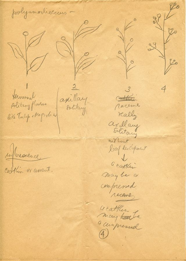 Newman's notes from a botany class, 1940